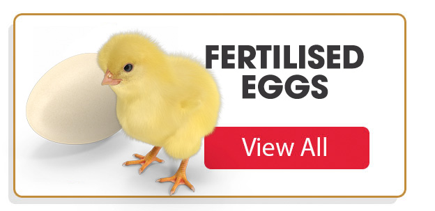 fertilised eggs