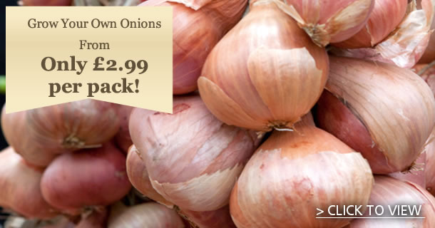 Grow your own Onions! - click for details