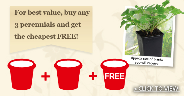 Buy any 3 Perennials and get the cheapest Free - click for details