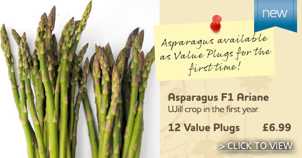 Asparagus which will crop in the first year - click for details