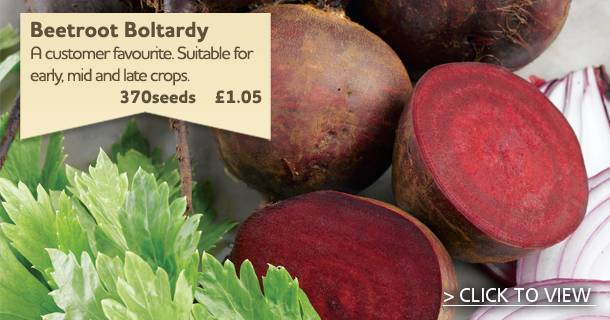 Bestselling Beetroot Boltardy Seeds - click for details