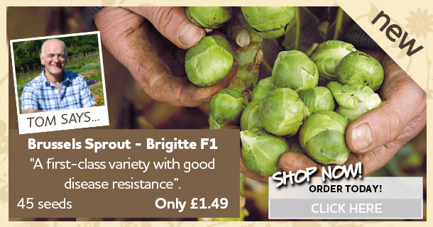 Brussels Sprout Seeds - Brigitte F1
