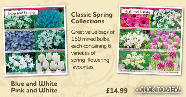 Classic Spring Bulbs Collection