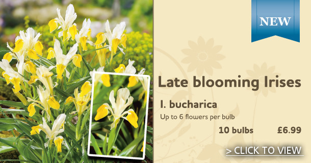 For Late Blooming stunning flowers - Click for details