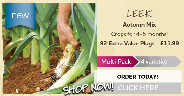 92x Leek Plug Plants - Autumn Mix - Extra Value