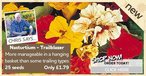 Nasturtium Seeds - Trailblazer