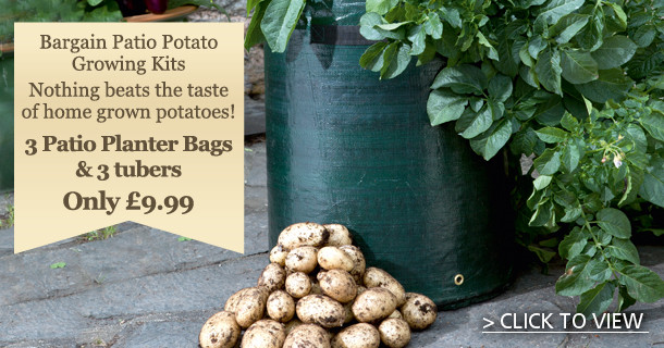 seed potatoes growing kit