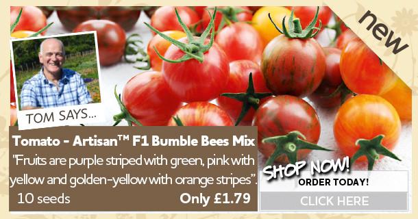 Tomato Bumble bee Seeds