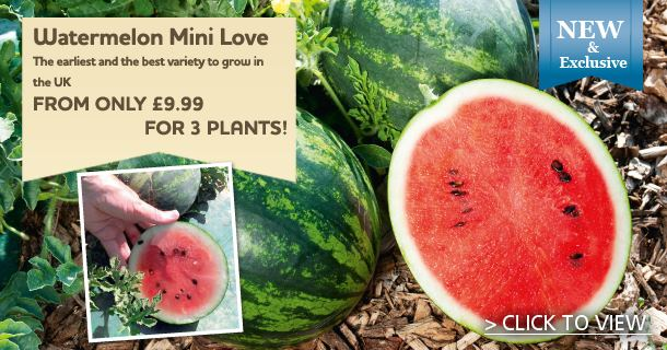 Yes you can grow a Watermelon!! - click for details