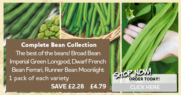 complete bean collection 434972