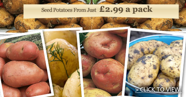 Grow your own potatoes - click for details