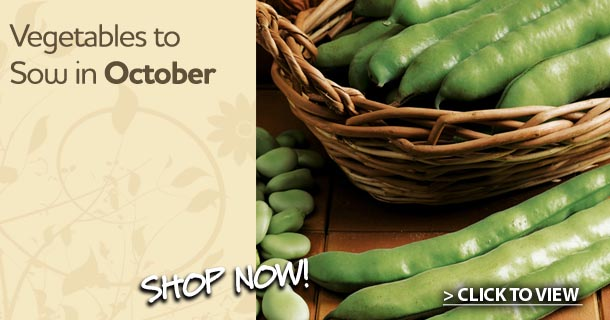 veg to sow in october