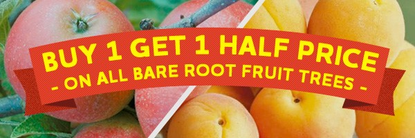 Buy one Get One Half Price on Bare Root Fruit Trees