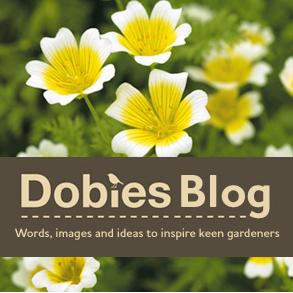 Dobies Blog