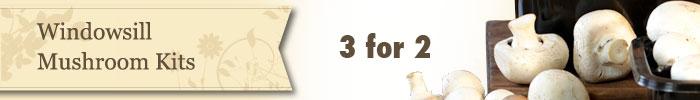 three for two on Windowsill Mushroom kits