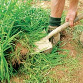 How to Grow Green Manure
