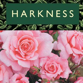 Harkness Roses