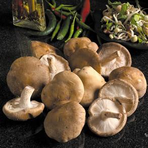 Mushrooms and Truffles