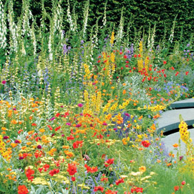 Must Have Perennial Plants