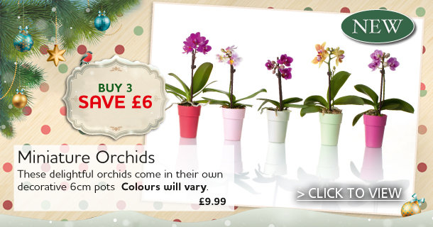 Miniature Indoor Orchids - Click for Details