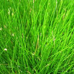 Oxygenating Aquatic Plants