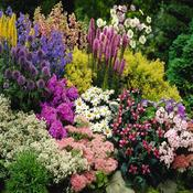 All Perennial Plants