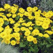Perennial Front of Border
