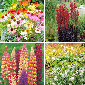 Perennial Pick and Mix Plants
