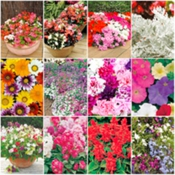 Pick and Mix Flower Plants