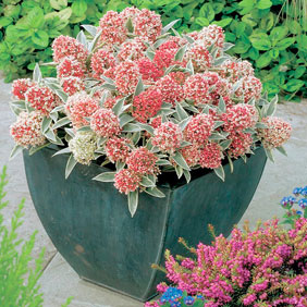 Sensational Shrubs