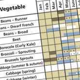 What Veg to Plant in