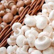 Mushroom Plug and Kits