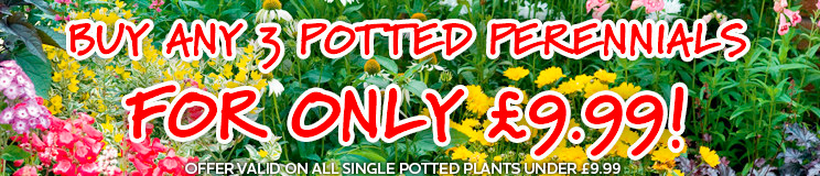 3 for £9.99 on Potted Perennials