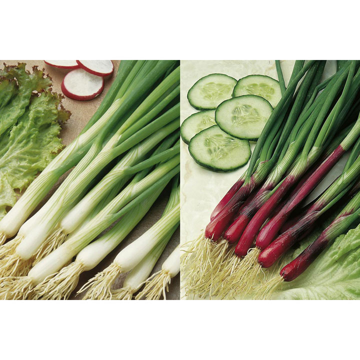 Onion (Salad) Plants - Red & White Mix