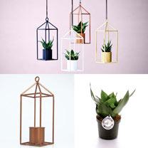Greenhouse Copper + Free 6cm Plant
