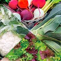 Vegetable Plants - Autumn Collection