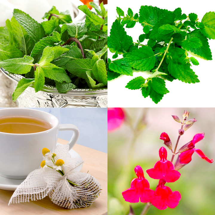 Herb Plants - Time for Tea Collection