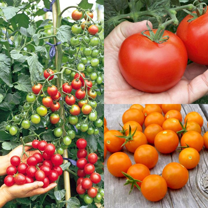 Tomato Grow Bag Crate Kit Collection