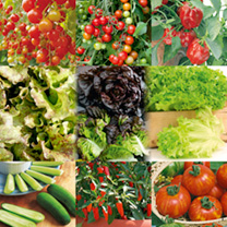 Veg Salad Plant Collection