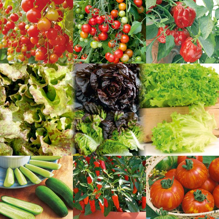 Veg Salad Plant Collection