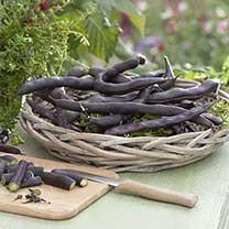 Climbing French Bean Seeds - Blauhilde