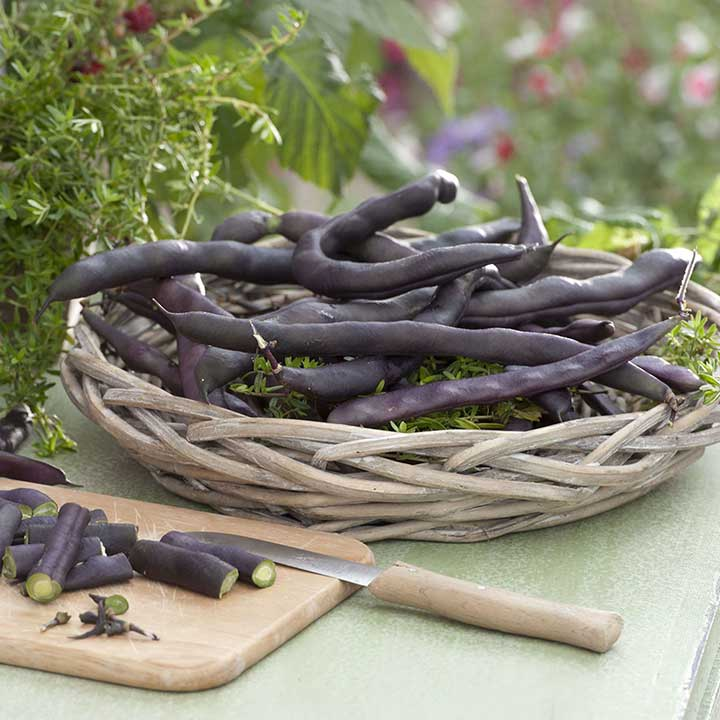 Climbing French Bean Seeds - Blauhilde