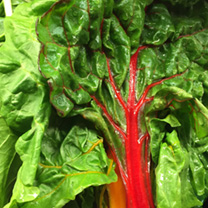 Spinach Beet Seeds - Rhubarb Chard