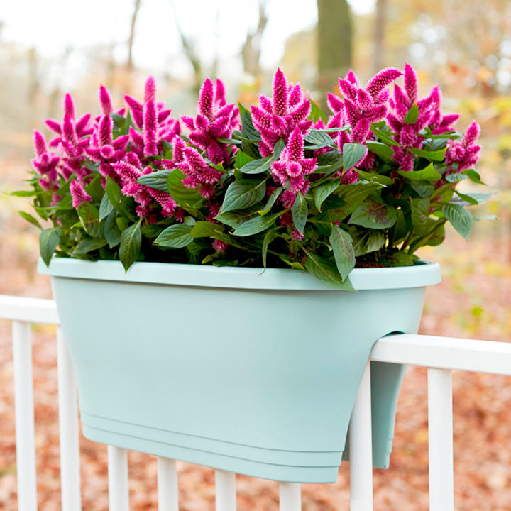 Corsica Flower Bridge Planter - 60cm Wide, Pack of 2