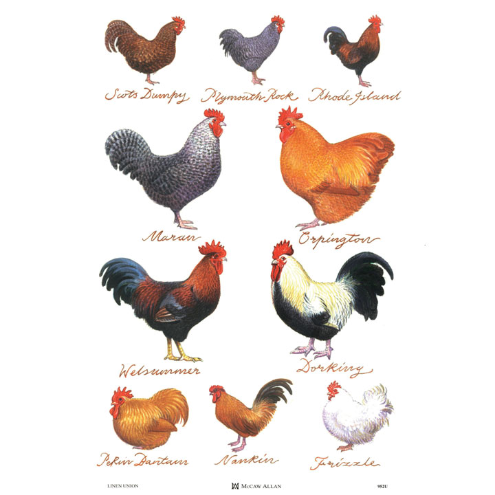 Chicken Breeds Linen Tea Towel