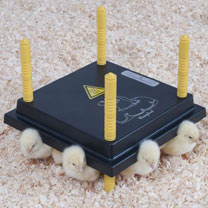Chicken Comfort Brooder 25 Plus