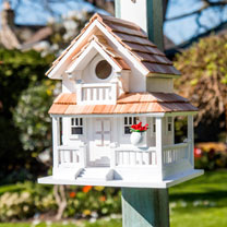Birdhouse - Backyard Bird Cottage