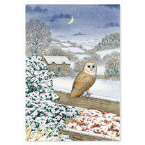Snowy Owl Christmas Cards