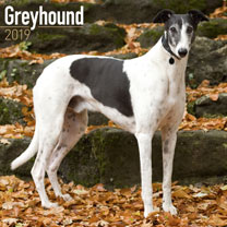 Greyhound Calendar