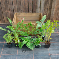 Crate Collection - Cottage Garden Plants, 2-Slat Crate
